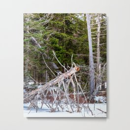 in the winter Metal Print