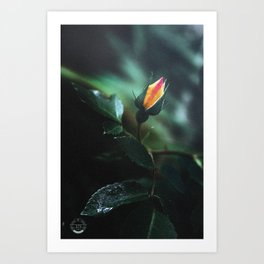 The voice of beauty Art Print