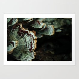 Forest Fungus Art Print