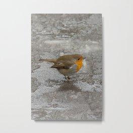 Robin on Ice Metal Print