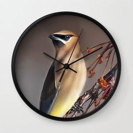 Cedar Waxwing Pose Wall Clock
