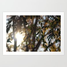 Leaves and Light Art Print