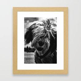 Shaggy Guy Framed Art Print