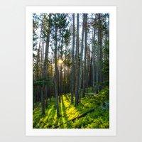 Aspen Sunrise Art Print