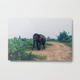Elephant in Udawalawe National Park, Sri Lanka Metal Print