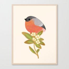 Eurasian bullfinch Canvas Print