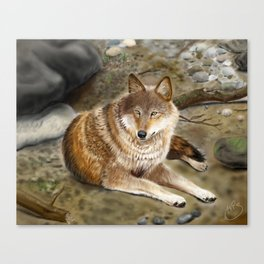 Wolf by the Riverbed Canvas Print