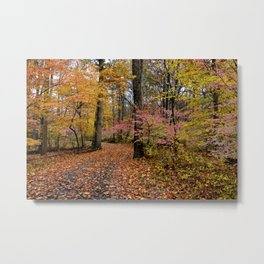 Pathway thru the Fall Metal Print