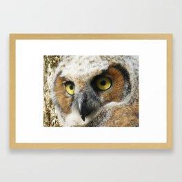 Young Owl close-up Framed Art Print