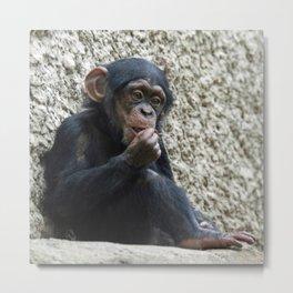 Chimpanzee_2014_1201 Metal Print