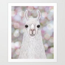 Llama farm animal portrait Art Print