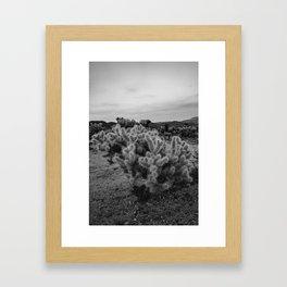 Cholla Cactus Garden IX Framed Art Print