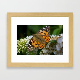 Time To Fly... Framed Art Print