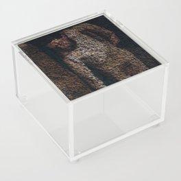 Figure Acrylic Box