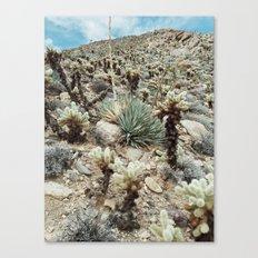 Mountain Cholla Canvas Print