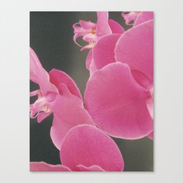 Abstract Orchids Canvas Print