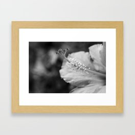 Hybiscus in Black and White Framed Art Print