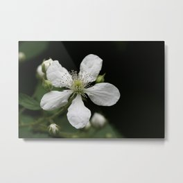 Mysterious Pretty White Flower (Photography: Vibrant Florals) Metal Print