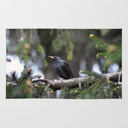 European starling Rug