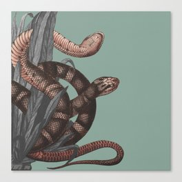 Snakes (animals collection) Canvas Print