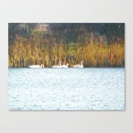 Swans in Autumn Canvas Print