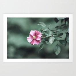 Pink California Rose Nature Photo Art Print