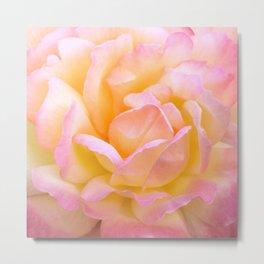 Pink & Yellow Rose Metal Print