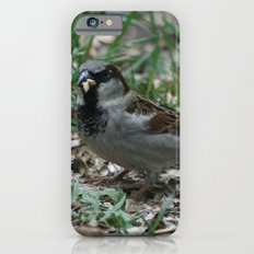 House Sparrow Slim Case iPhone 6s