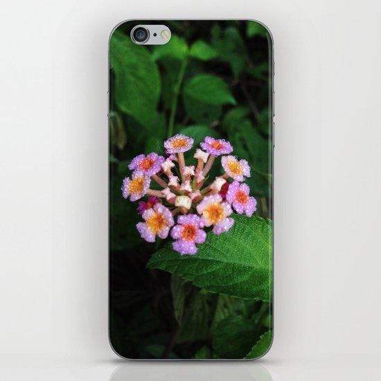 Lantana Camara iPhone & iPod Skin