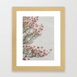 Pink Blossoms Against a White Wall Framed Art Print