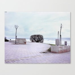 Lonely bush. Canvas Print