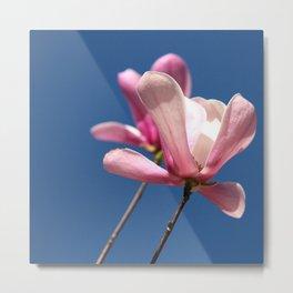 Pink flower in bloom Metal Print