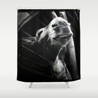 donkey Shower Curtains featuring donkey by chicco montanari