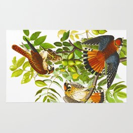 Sparrow Vintage Scientific Bird & Botanical Illustration Rug