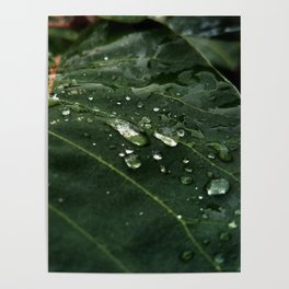 Greenery and leaf IV Poster