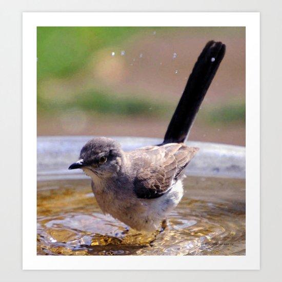 Mockingbird Bath Art Print