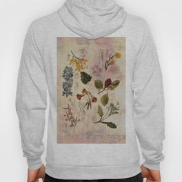 Botanical Study #1, Vintage Botanical Illustration Collage Hoody