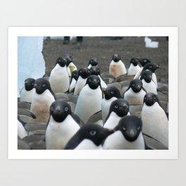 Adelie Penguins 2, Antarctica 2006 Art Print