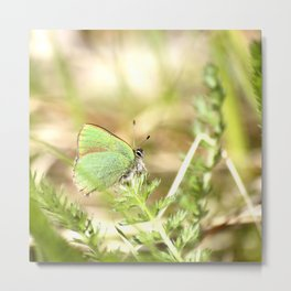 Green Butterfly In The Forest #decor #society6 Metal Print