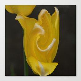 Twisted Tulip Canvas Print