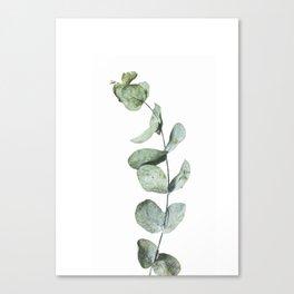 Eucalyptus, Minimalist Photography Canvas Print