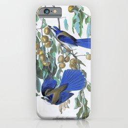 Florida Jay - John James Audubon iPhone Case