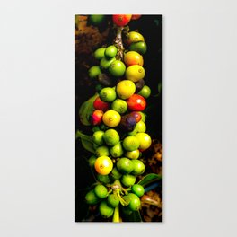 Coffee in the raw Canvas Print