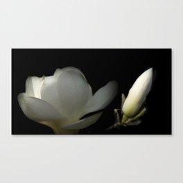 Yulan-Magnolia and bud on black -1- Canvas Print
