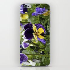 Violets on a rainy morning iPhone & iPod Skin