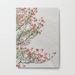 Pink Blossoms Against a White Wall Metal Print