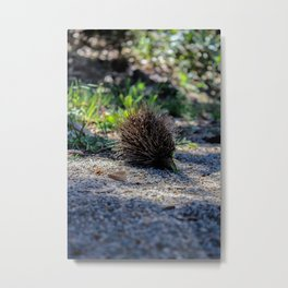 The Almost Echidna  Metal Print