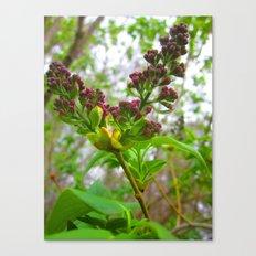 little leaf 12 Canvas Print