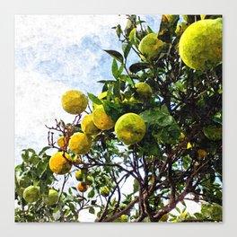 Oranges on orange tree Canvas Print