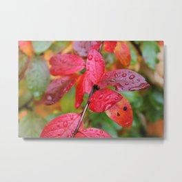 Red Leaves & Raindrops Metal Print